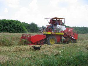 Жетва пшенице